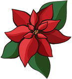 Christmas Poinsettia. A poinsettia flower vector illustration on a blank background Royalty Free Stock Image