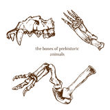 Sketchy prehistorical bones of animals . Archeology excavations. Vector illustration. Royalty Free Stock Photo
