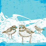 Sketchy Sandpipers Stock Images