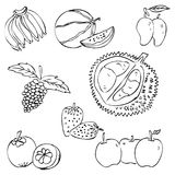 Sketchy tropical fruit, banana, watermelon, mango, grape, manggis, strawberry, apple, durian. Vector of sketchy line art tropical fruit isolated on white Stock Illustration
