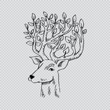 Skethcy of deer head. Hand drawing illustration Stock Images
