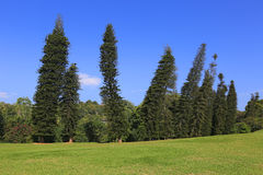 Skew tress in park. King's Garden in Kandy, Sri Lanka Stock Photography