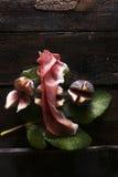 Skewer figi i baleron Zdjęcie Stock