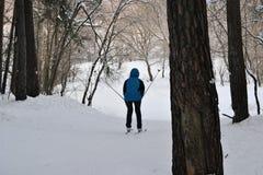 Skiër die in de middag in het bos ski?en royalty-vrije stock foto