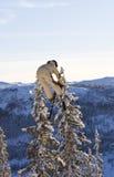 Skiüberbrücker gegen Baum Stockfotos