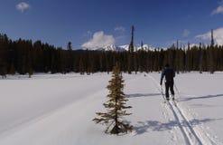 Ski de fond en parc national de Banff Image stock