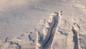 Ski de pays croisé dans la neige profonde photographie stock