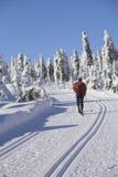 ski de Turbine-pays dans l'horizontal de l'hiver. Images libres de droits
