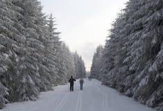 Ski fahren in einem schneebedeckten Winterwald Stockbild