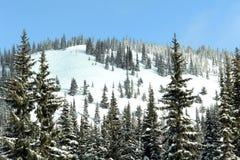 Ski-Hügel-Puder Stockfotografie