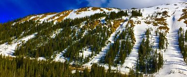 Ski Hill. Mountain ski trails between beautiful pine forest Stock Images