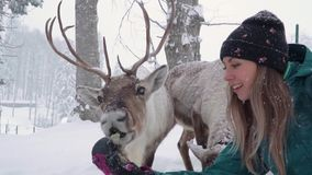 Ski resort entertainments. Consept of christmas vacation. A happy women stretches out his hand and feeds deer with big