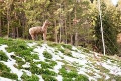Ski resort Forest Tale near Almaty, Kazakhstan Royalty Free Stock Image