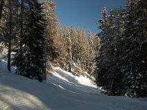 Ski run in mountain forest Stock Images
