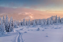 Ski run in mountains. Landscape with ski run in winter forest among mountains at the sunset Stock Image