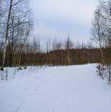 A ski run passes through the winter forest. Gloomy cloudy day, winter forest through which passes the ski run Royalty Free Stock Photo