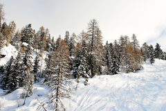 Ski run in snow forest on mountain in Dolomites, Italy Royalty Free Stock Photo