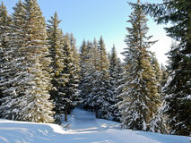 Ski run in snow forest on mountain, France Royalty Free Stock Photos