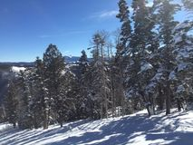 Ski run trees Royalty Free Stock Photography