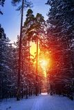 Ski run in the winter sunny forest. Winter snow forest trees sunset background. Red sunset in winter snow forest trees scene. Ski run in the winter sunny forest stock photos