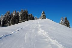Ski slope and firs Stock Images