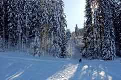 Ski slope in forest. Two skiers walking up ski slope through forest, Kirchberg, Austria Stock Photo