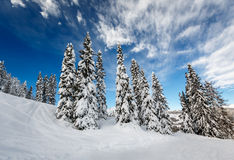 Ski Slope près de Madonna di Campiglio Ski Resort, Alpes italiens Image stock