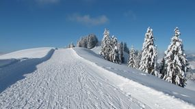 Ski slope and snow covered spruces Royalty Free Stock Photography