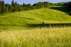 Ski slope. In the summer Royalty Free Stock Images