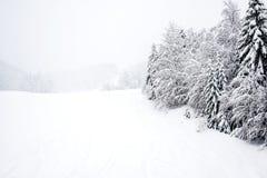 Ski slopes, coniferous forest in 'Kolasin 1450 Stock Photo