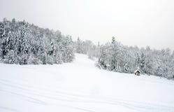 Ski slopes in the coniferous forest in 'Kolasin 1450' mountain s Royalty Free Stock Photo