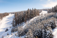 Ski slopes and forest Royalty Free Stock Photo