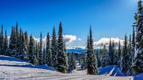 Ski Slopes on Mount Morrisey in the Shuswap Highlands. Ski slopes of Mount Morrisey at the village of Sun Peaks in the Shuswap Highlands of central British stock photography