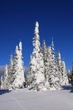 Ski slopes of Silver Star Stock Images