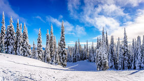 Ski Slopes and a Winter Landscape with Snow Covered Trees on the Ski Hills near the village of Sun Peaks Royalty Free Stock Images