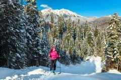 Ski touring in the forest, Transylvania, Carpathians, Romania, Europe royalty free stock image