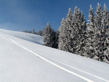 Ski traces. Winter scenery - blue sky, snow on trees, white snow, ski traces Royalty Free Stock Photo