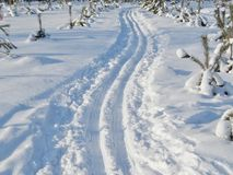 Ski track in the city park on a sunny winter day Royalty Free Stock Photo
