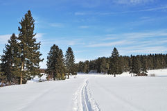 Ski track at forest edge in winter time Royalty Free Stock Image