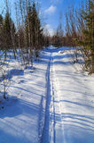 Ski track in the forest. Russian winter Stock Images