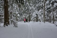Ski track in the forest with a skier in the background royalty free stock photo