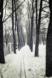 Ski track in a forest in the snow, black and white photography Royalty Free Stock Photos