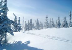 Ski track on a fresh snow in the forest, snow-covered spruces. Ski track on a fresh snow, woodland glade, snow-covered spruces, winter lovely day royalty free stock photos