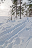 Ski track in Helsinki. Current winter has been one with lot of snow in Helsinki. People can now do winter sports even in Capital area royalty free stock photography