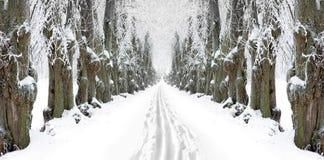 Free Ski Track In Avenue Stock Image - 23019491