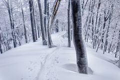 Ski track in mysterious snowy forest Stock Image
