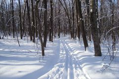 The ski track passes through the winter forest. Ski track passes through the winter forest and skiing is a good active holiday Stock Image