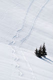 Ski track in powder snow Stock Images