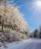 Ski track runs along the road. In the snowy forest.  Bright and sunny morning, New Year`s Stock Images