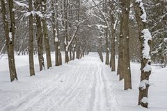 Ski track in the snow along the tree lane in the park in winter. Stock Photography